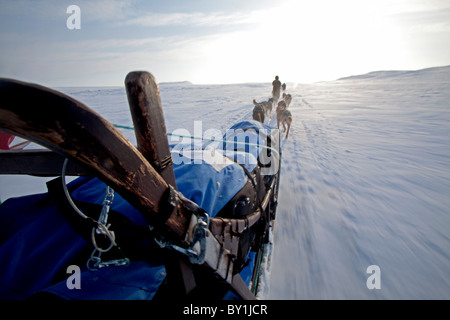 Norway, Finnmark Region. Dog sledding in the Arctic Circle - Stock Photo