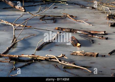 broken branches on frozen pond in winter sunshine - Stock Photo