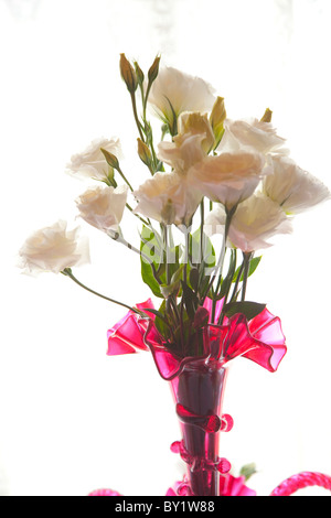 White Lisianthus flowers in a vase - Stock Photo