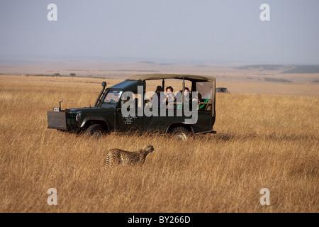 Kenya, Masai Mara.  Tourists on safari enjoying the sight of a cheetah out hunting on the grassy plains of the Masai - Stock Photo