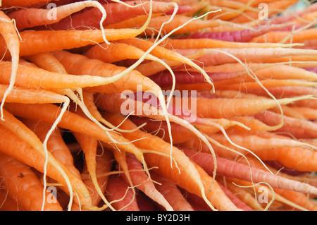 Carrots St Island Sale