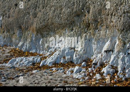 chalk limestone rock rocks cliff cliffs rock face cliff face geology erosion Jasmund national park Rugen Rügen island - Stock Photo
