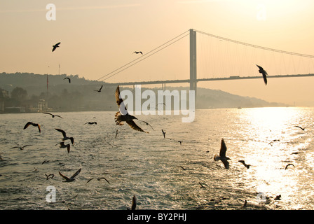 A flock of seagulls flies over the Bosphorus with the Bosphorus Bridge in the background through the haze and the - Stock Photo