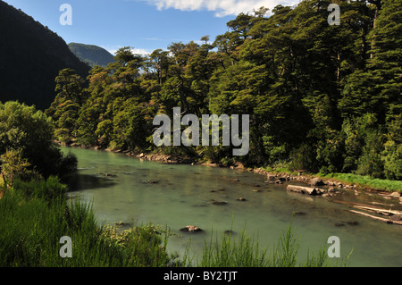 Green water of Rio Frias flowing through Valdivian Rain Forest trees towards Lake Brazo Blest, Puerto Blest, Andes, - Stock Photo