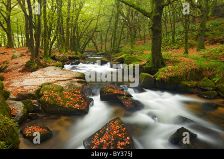 Golitha falls, a section of small waterfalls flowing through ancient woodland on Bodmin Moor - Stock Photo