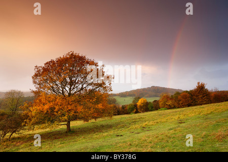 Autumn hues cover the trees, the sky fills with colour from the rising sun as rain showers pass overhead and create - Stock Photo