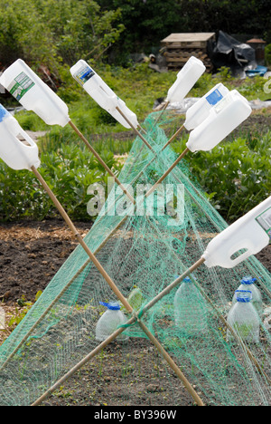 An allotment with canes and netting protecting seedlings, with plastic milk bottles on the ends of the canes - Stock Photo