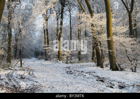 Winter Wonderland frosty woodland path magical hoar frost Buckinghamshire Chilterns - Stock Photo