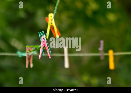 Cloth Pins hanging on the string, amung the trees in the garden. Shallow DOF. - Stock Photo