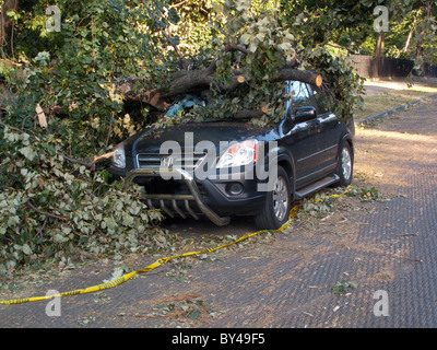 tree damage on a car in Prospect Park Brooklyn - Stock Photo