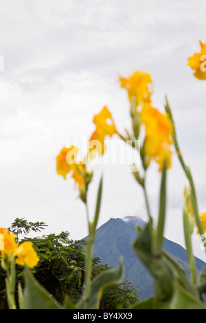 Canna Lilies in La Fortuna de San Carlos with the Arenal Volcano looming in the background in Alajuela, Costa Rica. - Stock Photo
