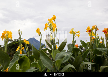Yellow Canna Lilies and church in La Fortuna de San Carlos with the Arenal Volcano in the background, Alajuela, - Stock Photo