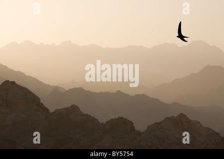 the mountains of the Sinai desert near Dahab in Egypt. - Stock Photo