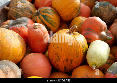 Fresh whole pumpkins and squash - Stock Photo