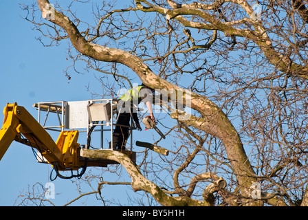 Tree surgeon cutting branches from  a large tree using a cherry picker for access - Stock Photo