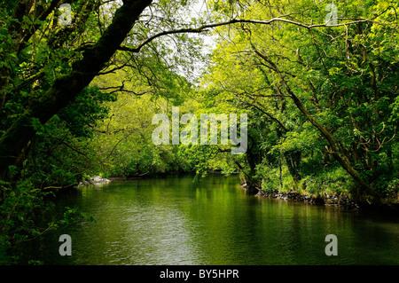River Teifi, Cardigan - Stock Photo