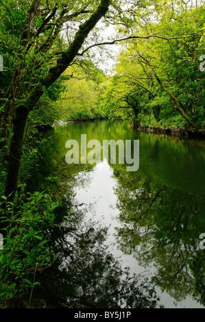 The River Teifi, Cardigan - Stock Photo