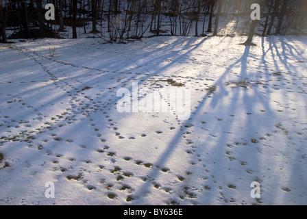 various animal footprints in snow - Stock Photo