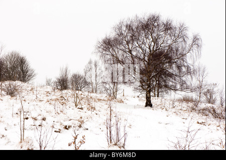Snow covered, Cotswold Way near Edge, Stroud, Gloucestershire, England, United Kingdom - Stock Photo