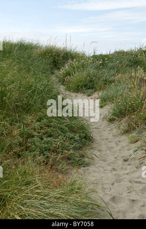 Sandy path at the beach - Stock Photo