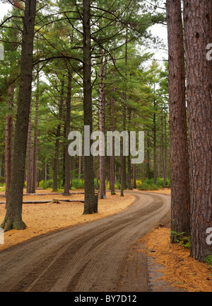 Winding unpaved road through beautiful fall nature scenery. Campground at Algonquin Provincial Park, Ontario, Canada. - Stock Photo