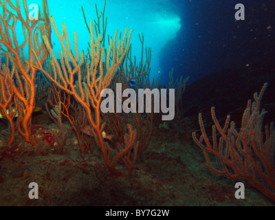 Soft corals in Boat Cave, Christmas Island, Indian Ocean - Stock Photo