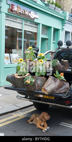Sunday flower market day on Columbia Road, Hackney in East London a shar pei puppy dog shelters under sunflower - Stock Photo