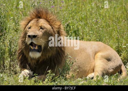 Safaritour 1 week  Tanzania  Manyara, Serengeti, Ngorongoro , Tarangire NP
