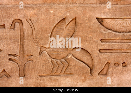 Hieroglyphics at the temple at Kom Ombo, on the Nile, Egypt, dedicated to Sobek, the crocodile god. - Stock Photo