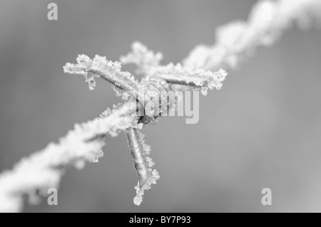 Detail of frost on a barbed-wire fence. In Black and White. - Stock Photo