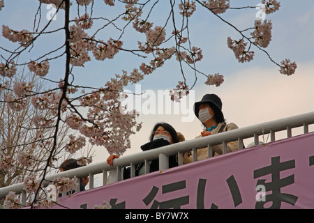 Japanese females wearing facemasks observing cherry blossom on bridge at Kunitachi, Tokyo, Japan - Stock Photo
