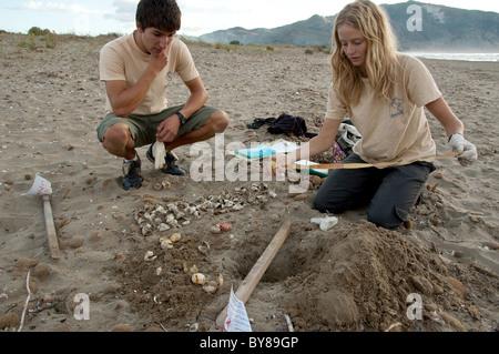 Turtle nest excavation - Stock Photo