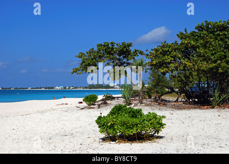 View of the beach, George Town, Grand Cayman, Cayman Islands, Caribbean. - Stock Photo