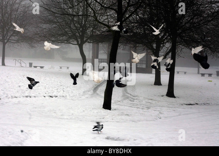 Snow and birds in South Park , Macclesfield - Stock Photo