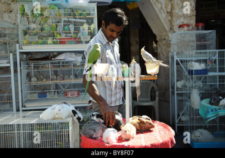 Birds for sale in Souq Waqif in Doha, in the state of Qatar - Stock Photo