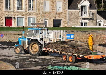 Tractor with cultivated oysters (Lophia folium) from oyster bank / park, Saint-Vaast-la-Hougue, Normandy, France - Stock Photo
