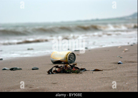 Seaweed with can on a beach,  Conwy Wales - Stock Photo