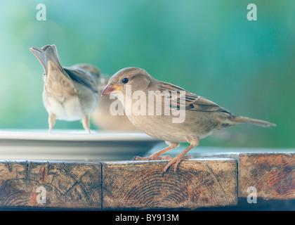 birds on a table - Stock Photo