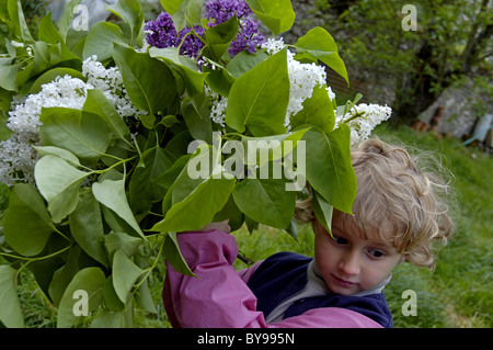 Four year old girl standing next to a lilac (Syringa) bush in the garden, France. - Stock Photo