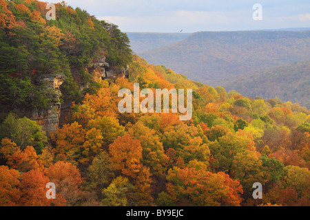 View from Laurel Gulf Overlook, Stone Door Trail, Savage Gulf State Natural Area, Beersheba Springs, Tennessee, - Stock Photo