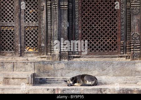 pashupatinath temple entrance with sleeping dog, Bhaktapur, Nepal - Stock Photo