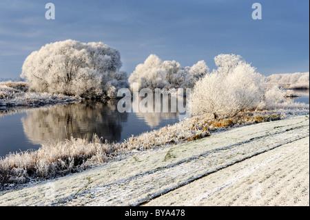 Frost-covered landscape along the Elbe River in Kirchwerder, Vier- und Marschlande district, Hamburg, Germany, Europe - Stock Photo