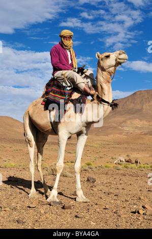 Tuareg, Targi, man sitting on a camel, Hoggar, Ahaggar Mountains, Wilaya Tamanrasset, Algeria, Sahara, North Africa, - Stock Photo