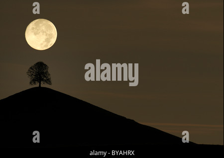 Tree on a moraine hill under a full moon, Hirzel, Switzerland, Europe - Stock Photo
