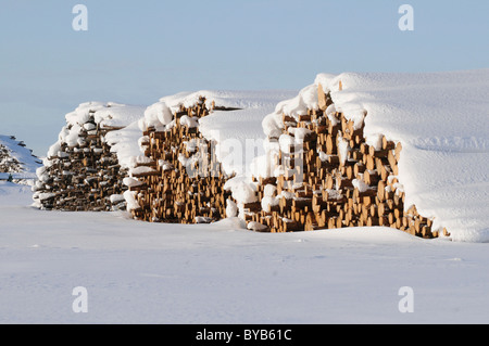 Timber in stacks, covered in snow, Ystad, Skåne, Sweden, Europe - Stock Photo
