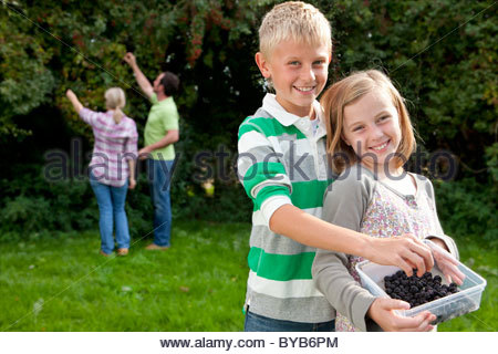 Smiling family gathering berries outdoors together - Stock Photo