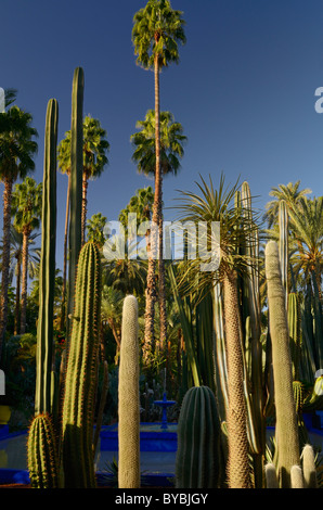 Palm trees and tall cactus plants with blue fountain at Majorelle Garden with blue sky in Marrakesh Morocco - Stock Photo