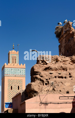 Minaret of Kasbah Mosque with flying and nesting White Storks on blue sky in Medina ruin of Marrakesh Morocco - Stock Photo