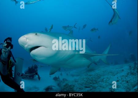 shark feeder and bull shark, Carcharhinus leucas, Playa del Carmen, Cancun, Quintana Roo, Yucatan Peninsula, Mexico - Stock Photo