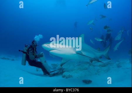shark feeder and bull shark, Carcharhinus leucas, Playa del Carmen, Mexico ( Caribbean Sea ) - Stock Photo